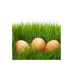 Décoration de Pâques oeuf brun